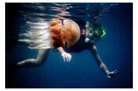 carolyn-and-jellyfish.jpg